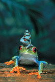 Red Eyed Tree Frogs Art Print Poster Plakater