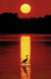 Hank Gans (Sunset in the Florida Keys) Art Poster Print Posters