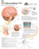 Understanding CNS Educational Chart Poster Affiches
