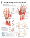 Laminated Understanding the Hand and Wrist Educational Chart Poster Posters