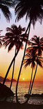 Sunny Palms Beach Giant Door Poster Art Print Posters
