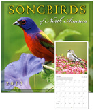 Songbirds of North America - 2013 12-Month Calendar Calendars