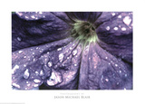 Jason Michael Blair Petunia Photo Art Print Poster Prints