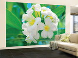 Frangipani Blossoms Huge Wall Mural Art Print Poster Wallpaper Mural