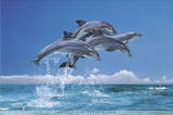 Steve Bloom (Four Dolphins) Art Poster Print Prints