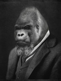 Mario Gorillini Gicléetryck på högkvalitetspapper av Grand Ole Bestiary