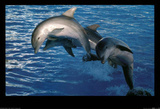 Dolphins in Freedom Photo Print Poster Prints