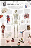 The Human Body Dorling Kindersley Educational Poster Print Prints