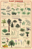 Plant Kingdom 2 Educational Science Chart Poster - Reprodüksiyon