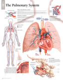 The Pulmonary System Educational Chart Poster Fotografía