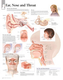 Laminated Ear, Nose and Throat Educational Chart Poster Poster