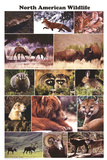 North American Wildlife Educational Science Chart Poster Pôsters