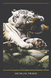 Bengal Tigers (White & Orange Tigers) Art Poster Print Photo