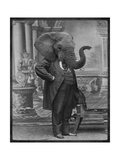 Hortence J. Pacadorf (l'éléphante) Art par  Grand Ole Bestiary