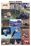 Laminated African Wildlife Educational Animal Chart Poster Plakaty