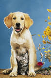 Mr Big & Mrs Little (Dog & Cat) Art Poster Print Poster