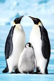 Penguin Family Art Print Poster Plakater