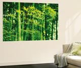 Dave Brullmann Bamboo in Spring Mini Mural Huge Poster Art Print Wandgemälde