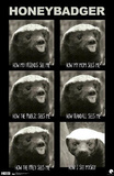 Honey Badger See Me Poster