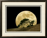 Windswept Live Oak Tree and Rising Full Moon at Night Framed Photographic Print by Images Monsoon