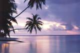 Sonnenuntergang in den Tropen Poster