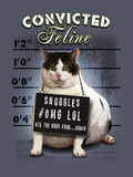 Convicted Feline Prints by Jim Baldwin