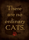Ordinary Cat Posters by Stephanie Marrott
