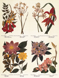The New Botanic Garden Prints by Sydenham Teast Edwards