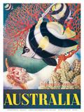Australia, Great Barrier Reef c.1956 Kunstdrucke von Eileen Mayo