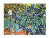 Garden of Irises (Les Irises, Saint-Remy), c. 1889 Kunstdrucke von Vincent van Gogh