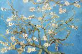 Blühende Mandelbäume, San Remy ca. 1890 Kunstdruck von Vincent van Gogh