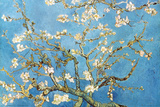 Almond Branches in Bloom, San Remy, c. 1890 Prints by Vincent van Gogh