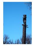 Tree Trunk Burned Print by  NaxArt