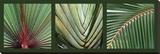 Palmiers Reproduction sur toile tendue par Laurent Pinsard