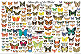 Butterflies of the World Plakat