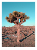 Joshua Tree Poster by  NaxArt