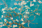 Almond Branches in Bloom, San Remy, c.1890 Photo by Vincent van Gogh
