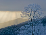 Rime Ice on Trees with Blue Shadows; Sunlight Streaming Through Clouds Photographic Print by Amy & Al White & Petteway