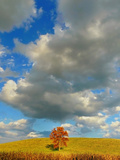 A Lone Tree under a Cloud Filled Sky Photographic Print by Amy & Al White & Petteway