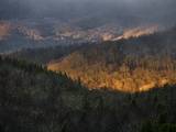 Sunlight Illuminating a Forested Mountain Valley Photographie par Amy &amp; Al White &amp; Petteway