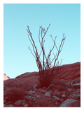 Desert Plant Posters by  NaxArt