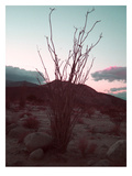 Desert Plants And Sunset Posters by  NaxArt