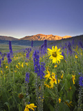 Wildflowers in the Rocky Mountains at Sunrise Impressão fotográfica por Robbie George