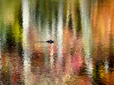 Autumn Trees are Reflected in the Lake at Connemara Photographie par Amy &amp; Al White &amp; Petteway