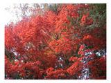 Red Tree Art by  NaxArt
