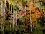 Autumn Trees are Reflected in the Lake at Connemara Photographic Print by Amy & Al White & Petteway