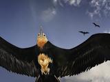 A Frigatebird Comes in for a Landing on Rawaki Island Papier Photo par Brian J. Skerry