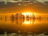 Silhouetted Cypress Trees at Sunrise in a Lake Photographic Print by Robbie George