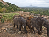 Orphan Elephants Are Introduced to Tsavo National Park Photographic Print by Michael Nichols