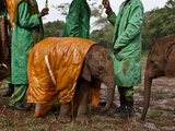 Keepers Protect a Baby Elephant From the Cold and Rain With a Custom-Made Raincoat Photographic Print by Michael Nichols